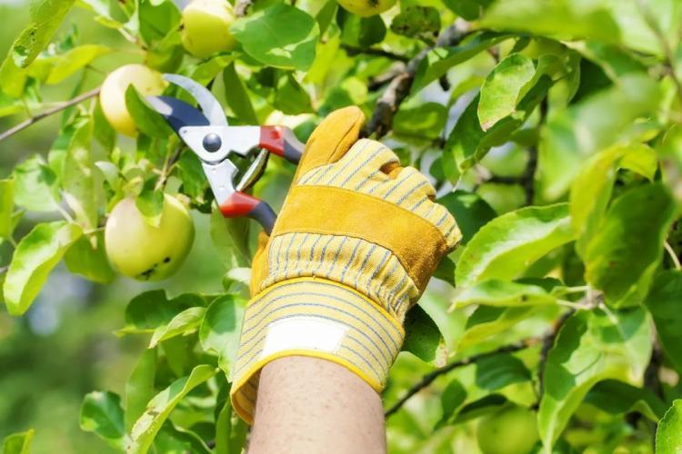 Уход за яблонями круглый год – Как ухаживать за посаженной яблоней