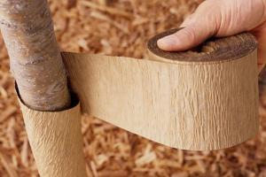 Защита деревьев при строительстве
