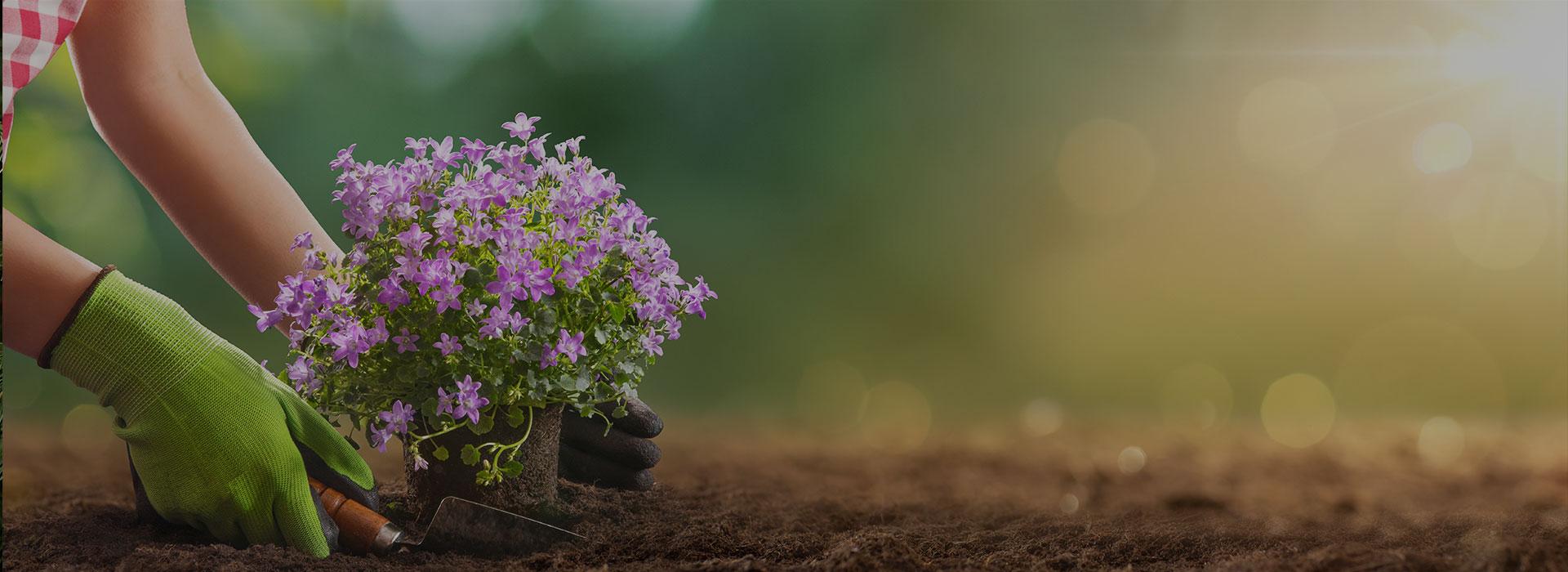 Посадка растений </br>с гарантией